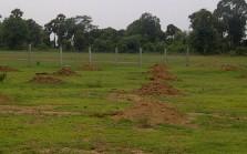 Shendra plot